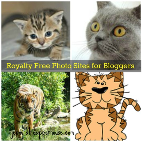 #cats #cat #royalty #free #photos #photography @dapperhouse