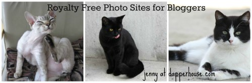 #royalty #free #cats #photos #pics @dapperhouse