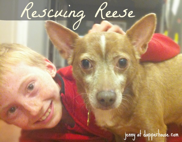 Rescuing Reese older dog adoption @dapperhouse