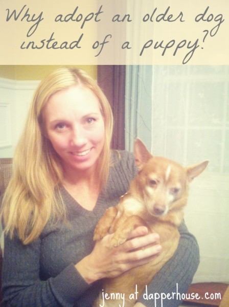 Why adopt an older dog instead of a puppy @dapperhouse #BlogEase #PetMonth #rescue #chihuahua