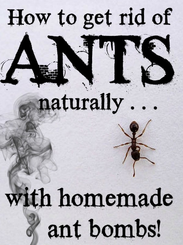 How To Get Rid Of Ants Naturally With Homemade Ant Bombs