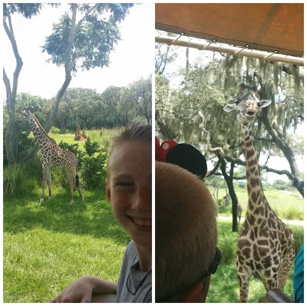 Jenny at dapperhouse goes to animal kingdom disney world giraffe1