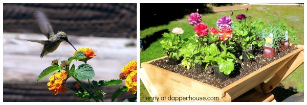 Fun and Unique Gardening Tips fpr smaller spaces from jenny at dapperhouse