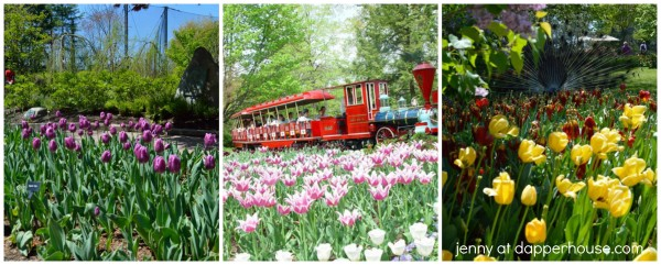 Cincinnati Zoo & Botanical Gardens #SpringInCincy - jenny at dapperhouse