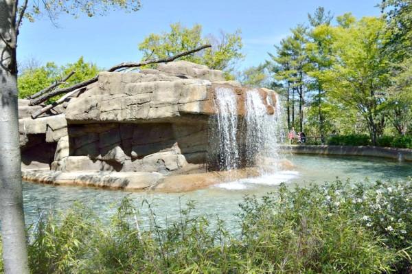 Cincinnati Zoo and Botanical Garden #SpringInCincy - jenny at dapperhouse
