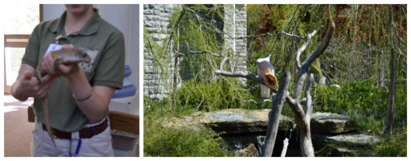 Cincinnati zoo #SpringInCincy - jenny at dapperhouse