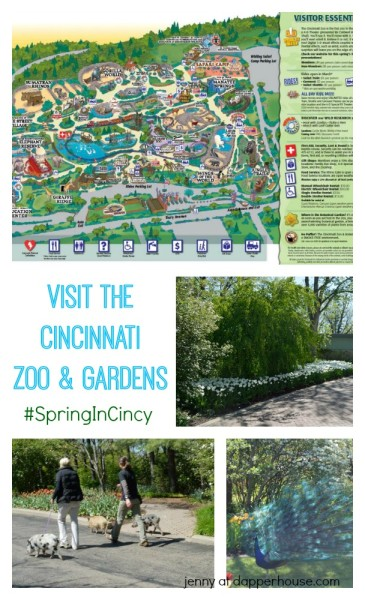 Visit the Cincinnati Zoo and Gardens to celebreate the gorgoues #SprinInCincy - jenny at dapperhouse