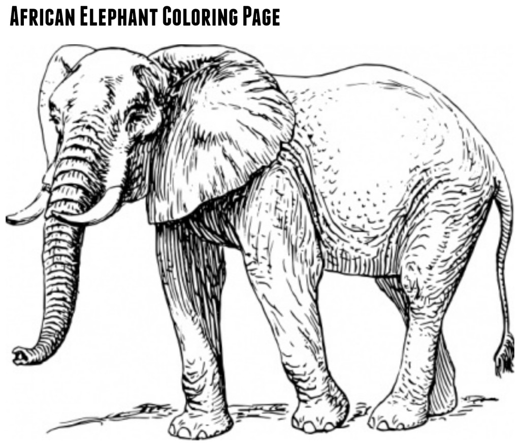free printables fun u0026 games for elephant day sept 22