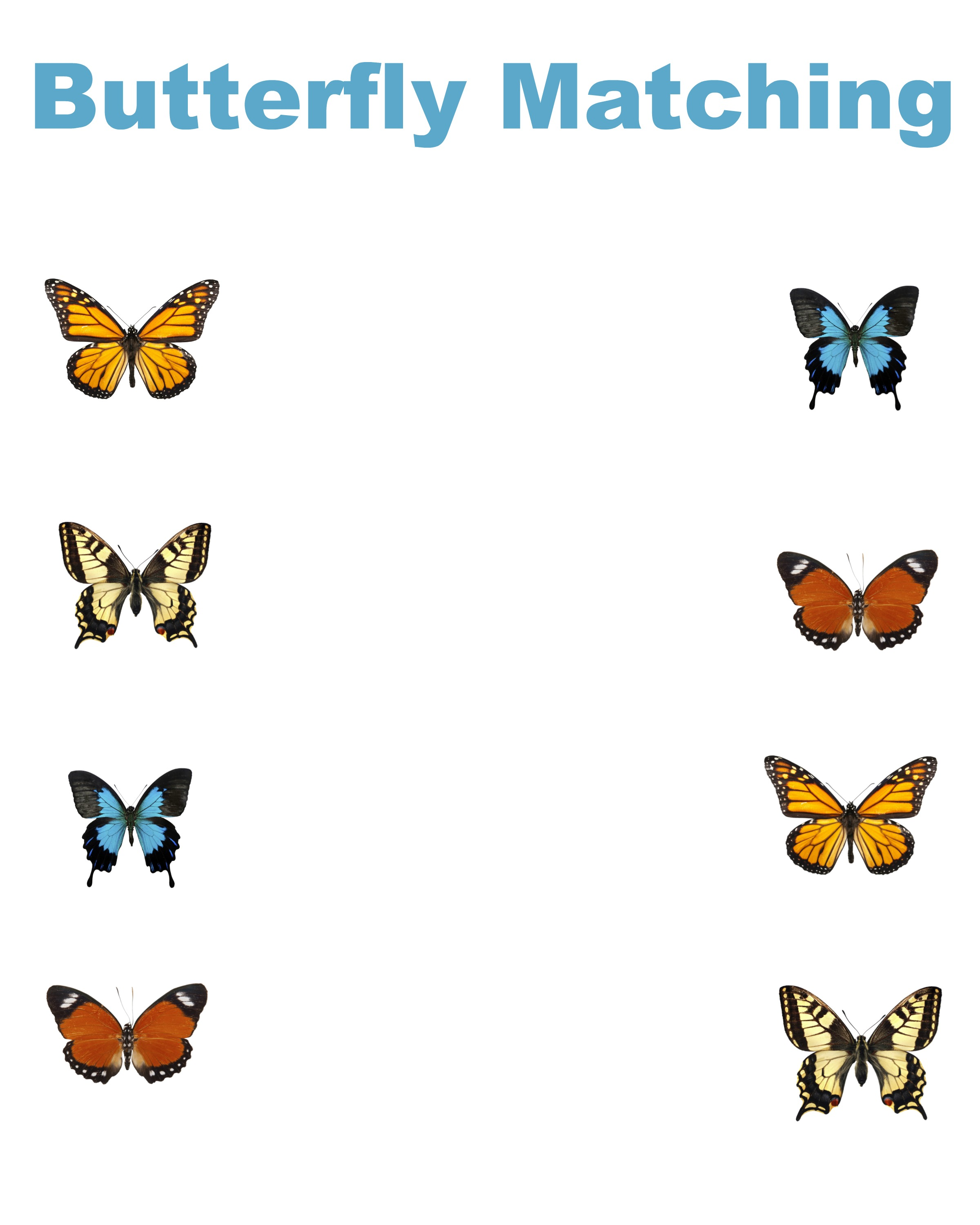 Free Printable Matching Worksheets Dr Suess Stars Butterflies – Butterfly Worksheet