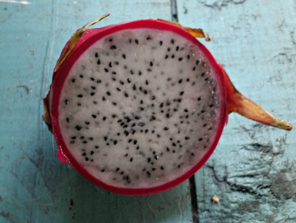 dragon fruit is a healthy and hydrating food - jenny at dappperhouse - health benefits