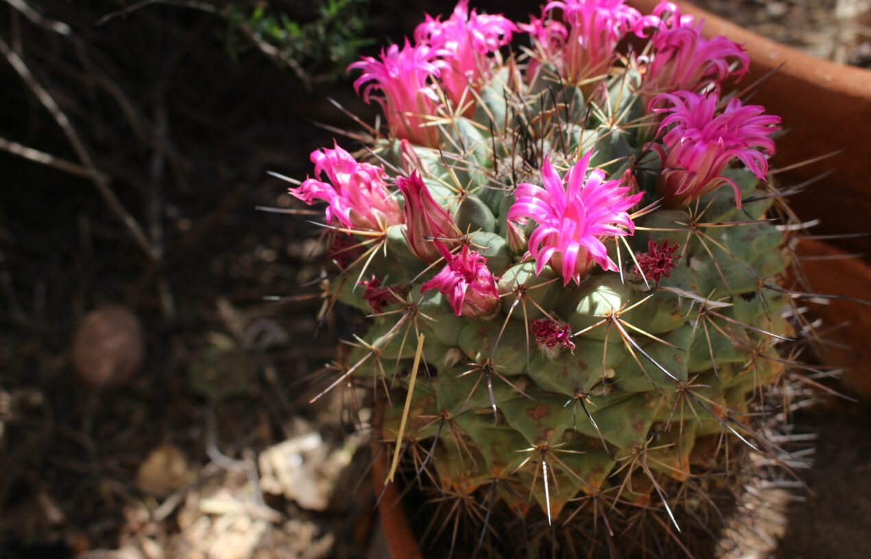 The Beauty of Color and Nature in the Arizona Desert