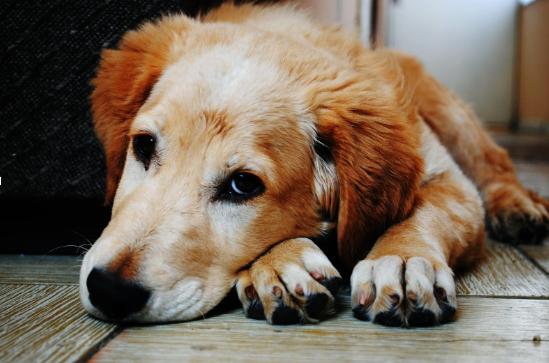 5 Health Problems That Senior Dogs Encounter