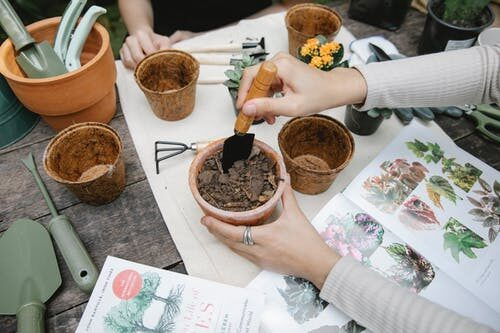 6 Top Tips For Gardening On A Budget