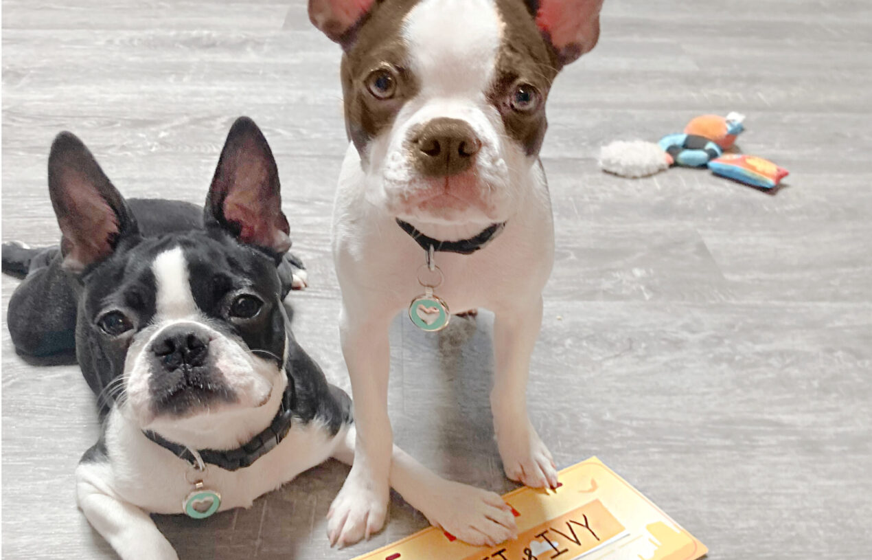What is a BarkBox Subscription for Dogs?